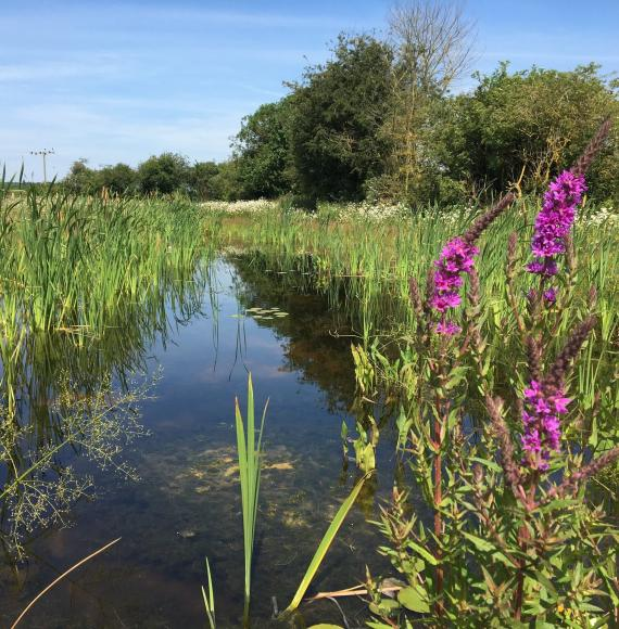 HS2: Webinar to discuss new habitats and wetlands in the West Midlands