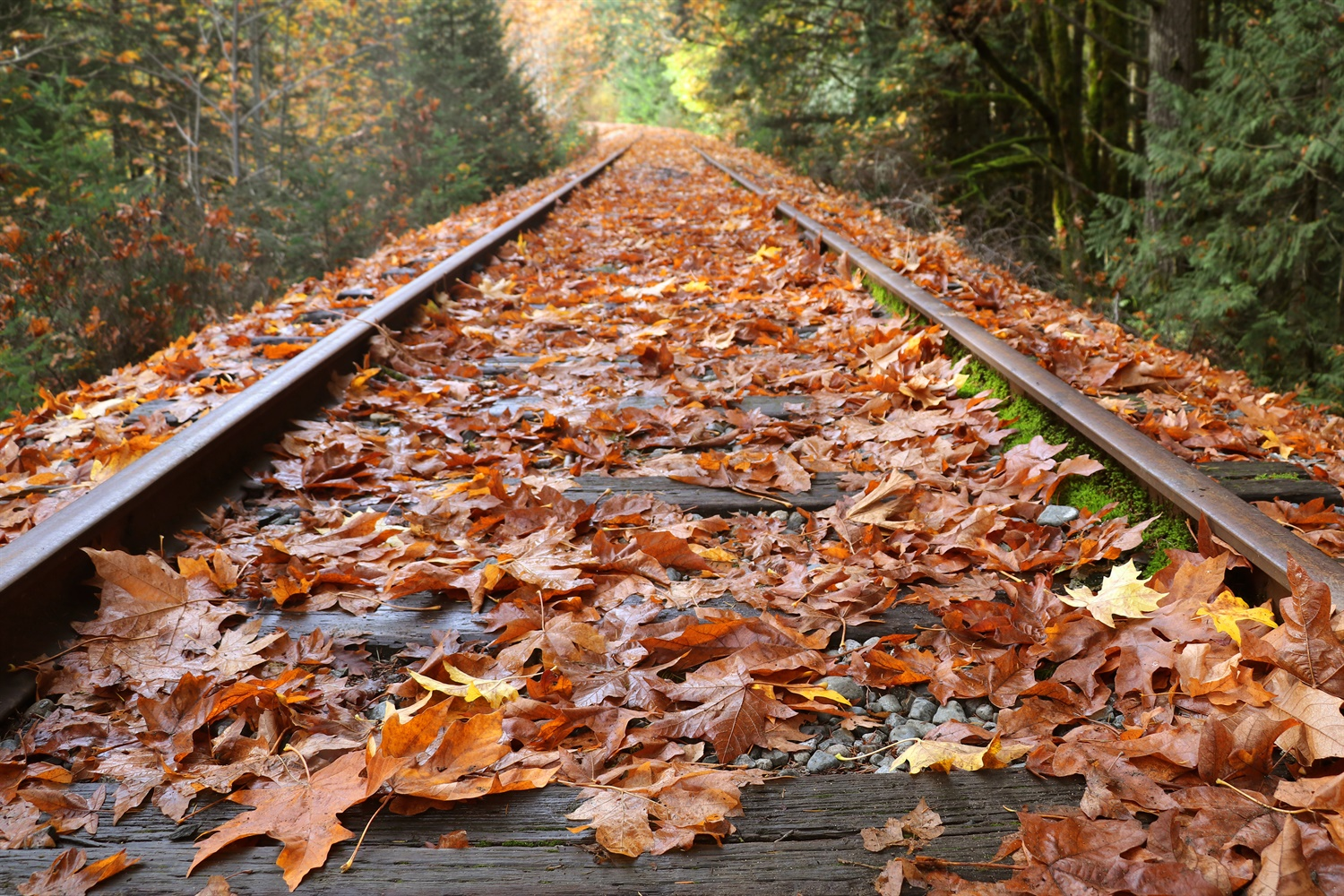 Overcoming leaves on the line
